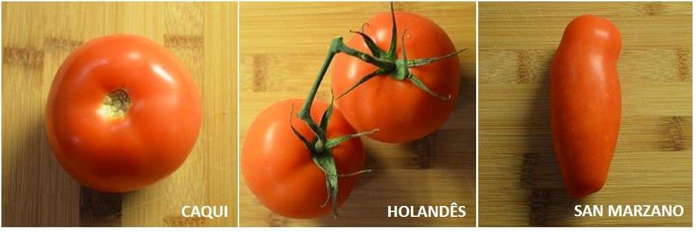 comparação tomates caqui san marzano holandês