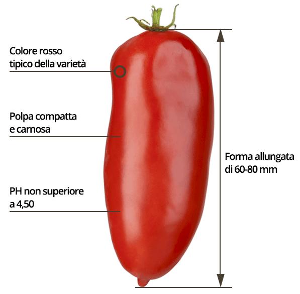 características do Tomate San Marzano (fonte: Consorzio S. Marzano)