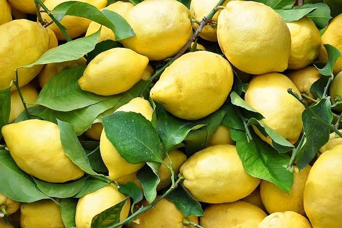 Limão da Costa Amalfitana, na Itália
